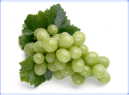 Create a vector illustration of engraving grapes with WidthScribe2